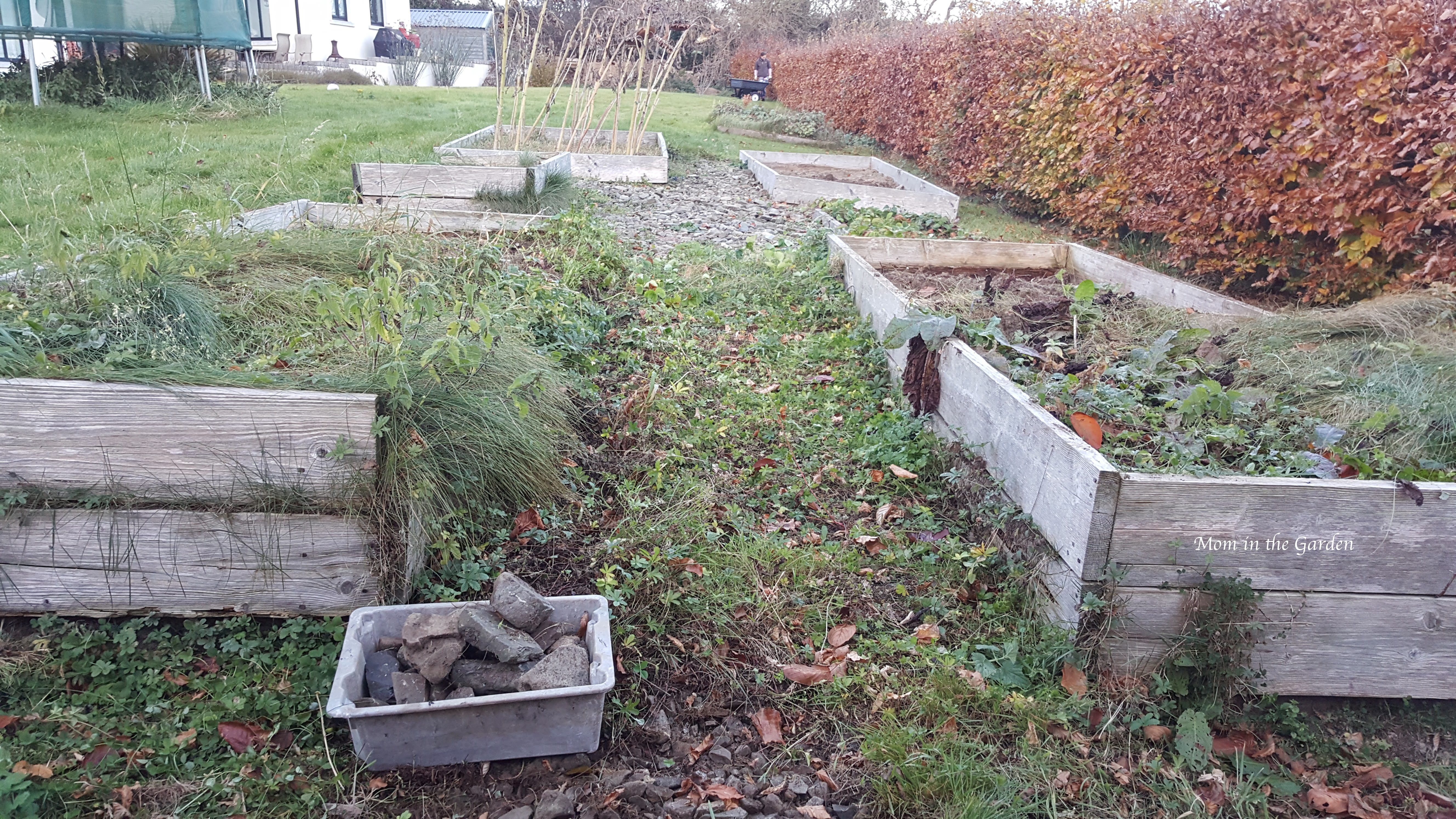 """a """"before"""" picture of a messy part of the garden"""