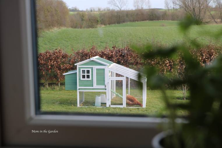 The chickens can be seen out our kitchen window