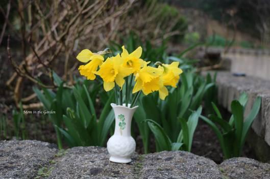 Daffodils in an Irish made Belleek vase
