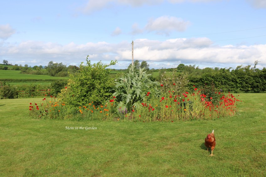 Rainbow garden with one chicken