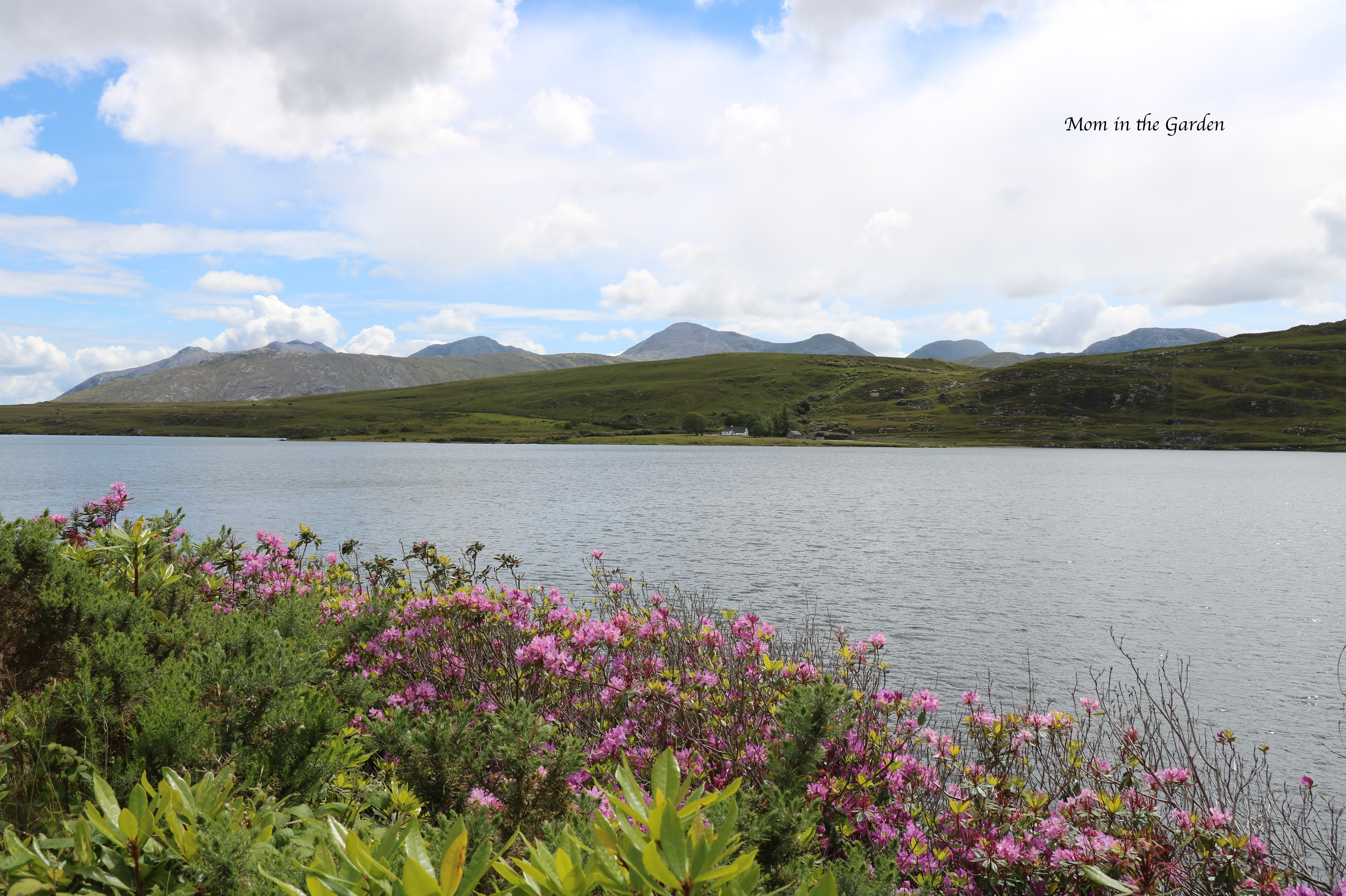 rhododendrons and lake view