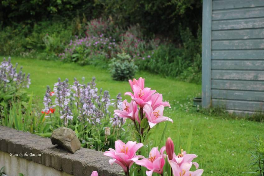 Lilies + Hosta