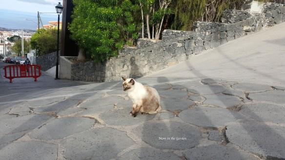 Barranco del Infierno CAT at the entrance