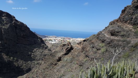 Barranco del Infierno sea view with cactus