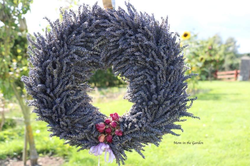 Completed Lavender Wreath in garden