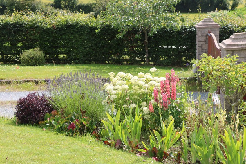 Front Gate garden with hydrangea, lavender and lupin