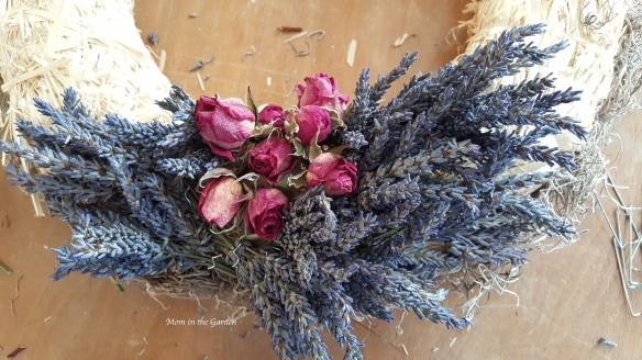 Lavender Wreath roses + lavender start