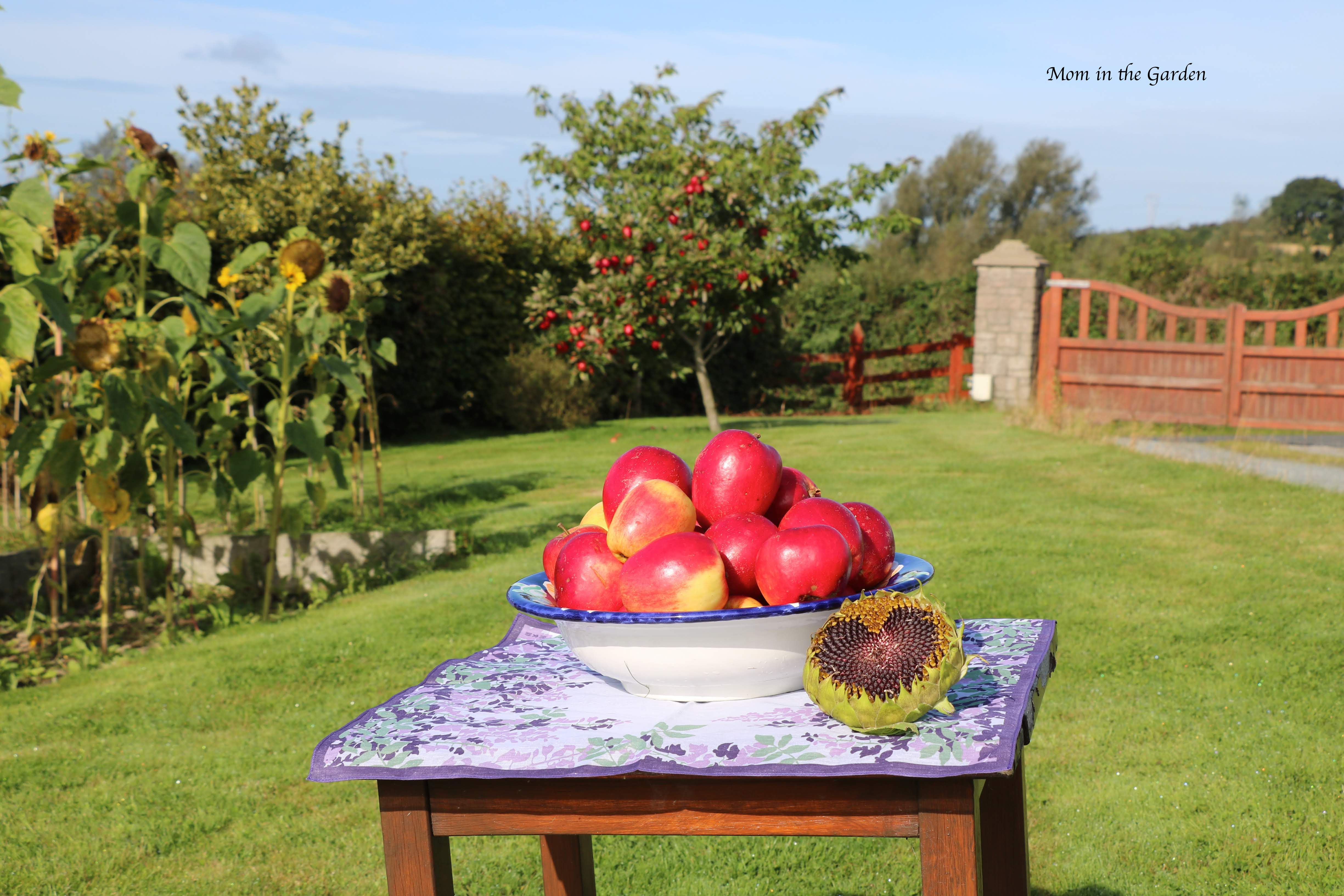 Apple tree + bowl of apples + sunflowers Sept 10