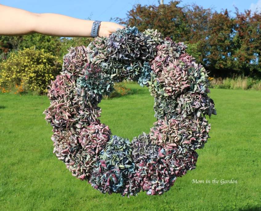 ta-da! completed hydrangea wreath