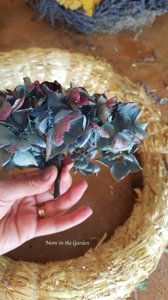 blue(ish) mophead hydrangea flowers to begin a wreath