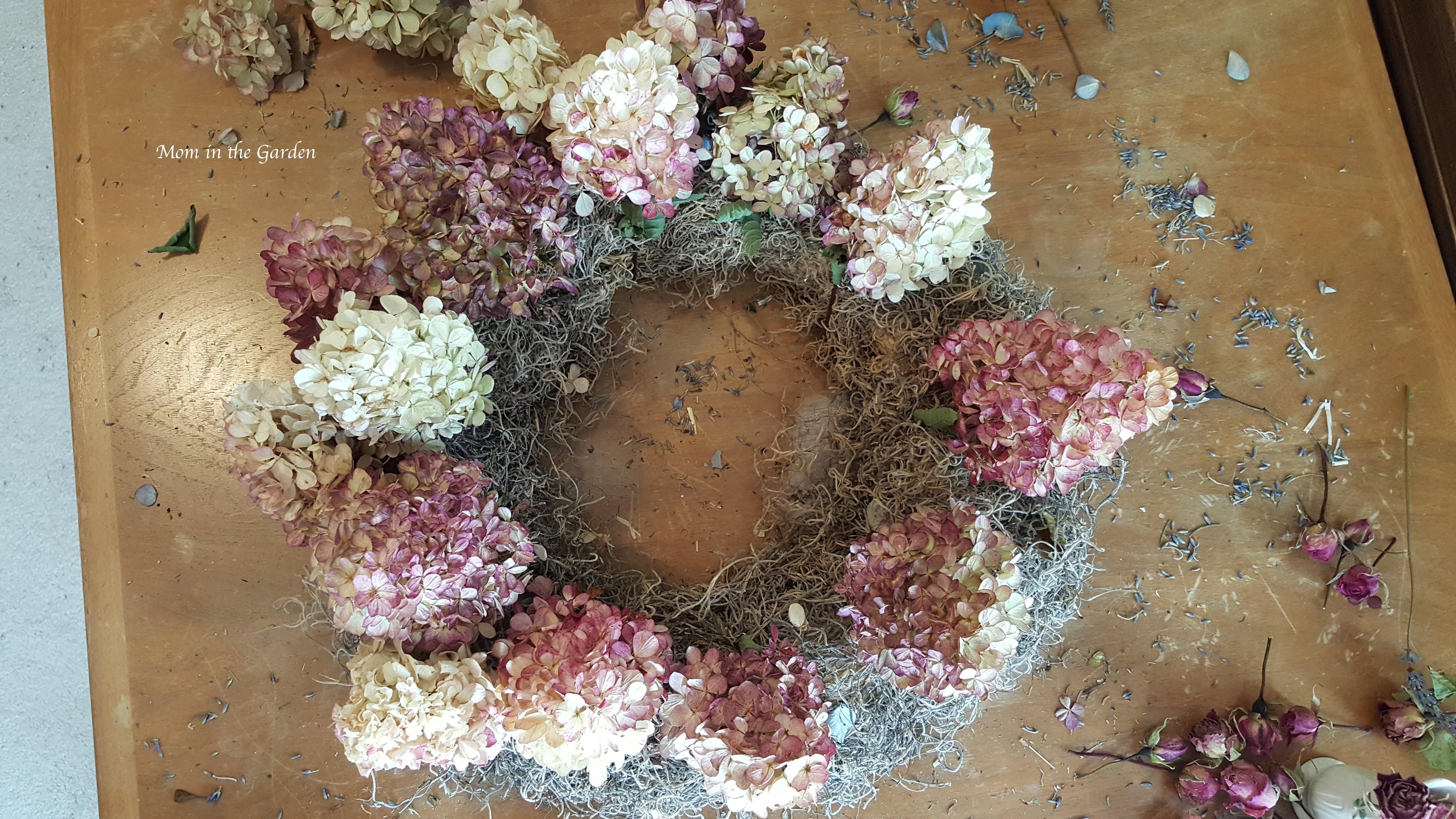 Hydrangea 'Vanille Fraise' Paniculata 'Renhy'