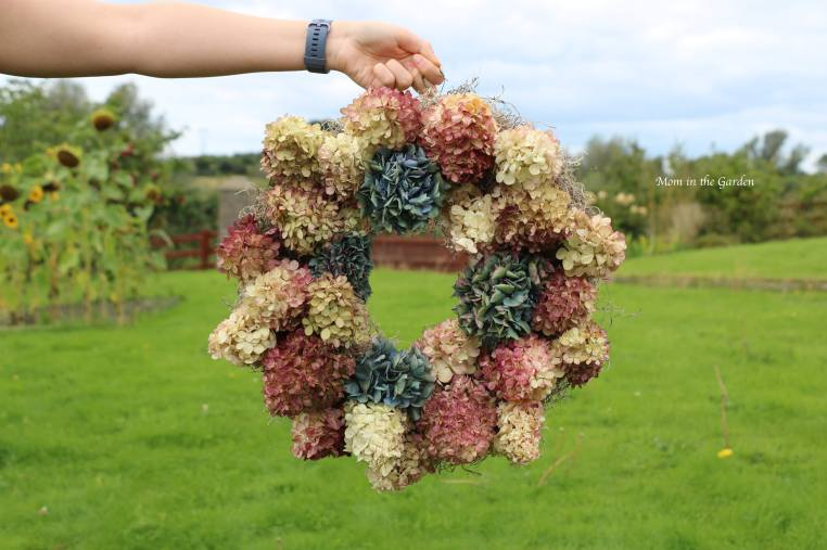 Wreath made of hydrangea 'Vanille Fraise' Paniculata 'Renhy' along with some mophead hydrangea stems.