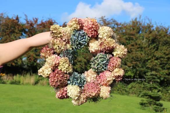 Hydrangea 'Vanille Fraise' Paniculata 'Renhy' wreath