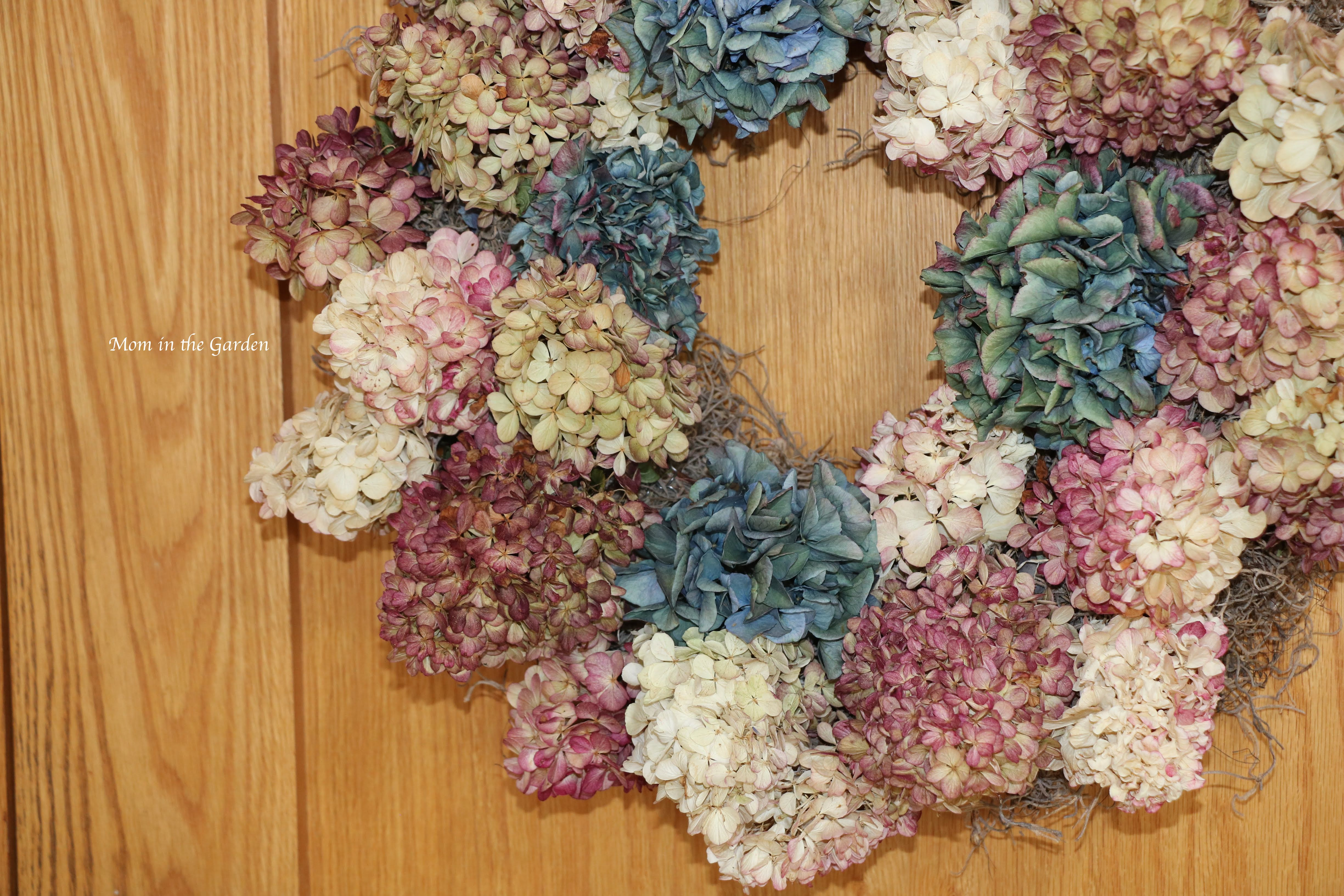 hydrangea paniculata wreath