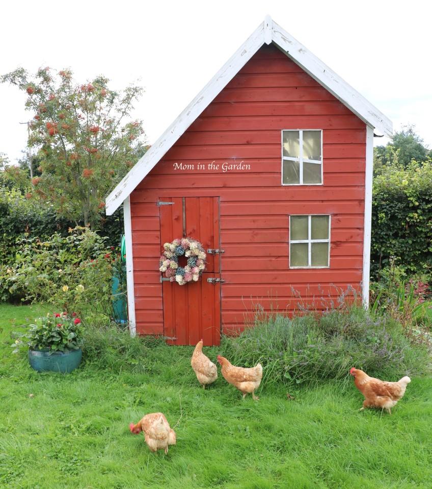 hydrangea paniculata wreath playhouse + chickens