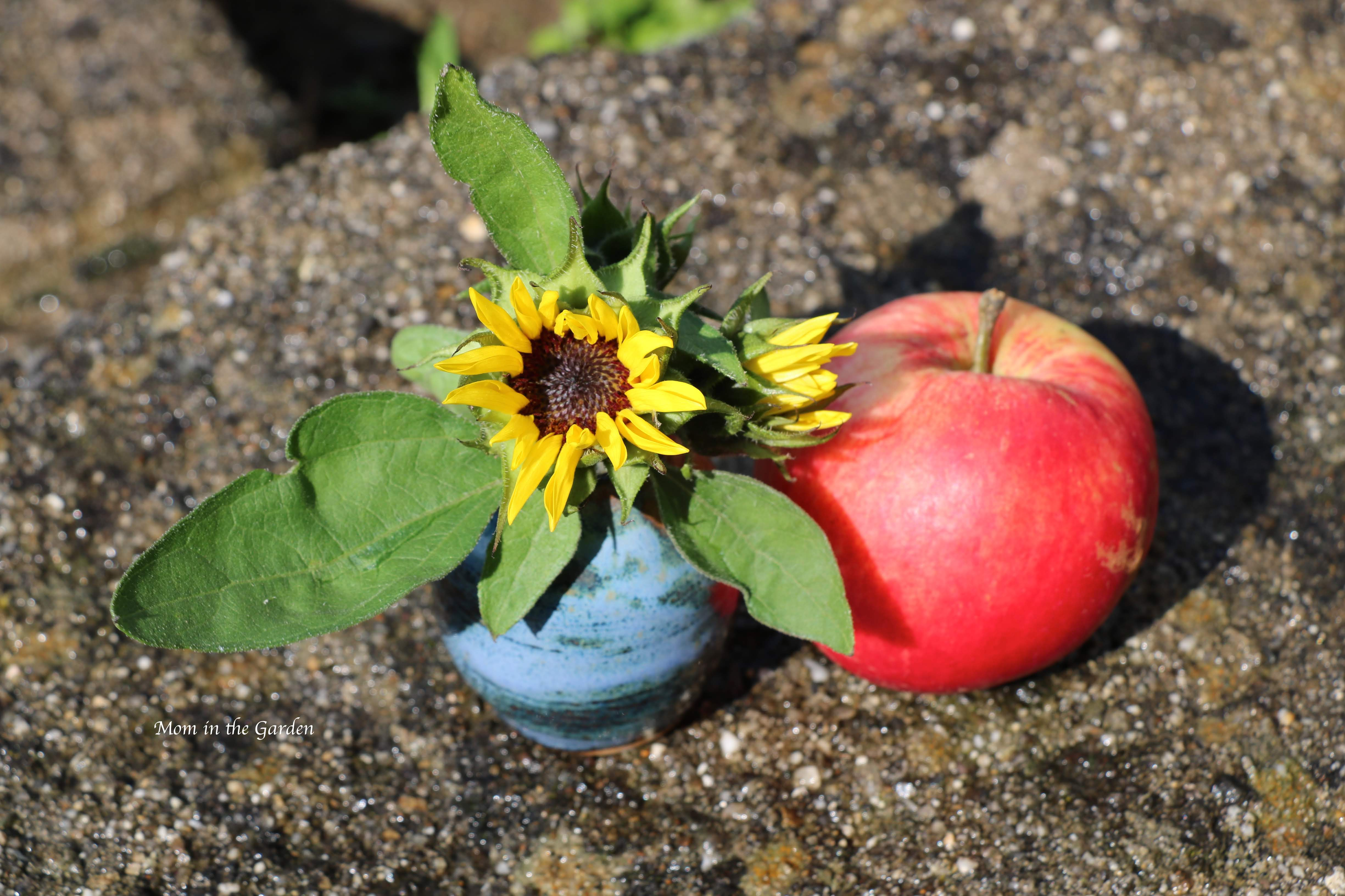 miniature sunflower vase + apple