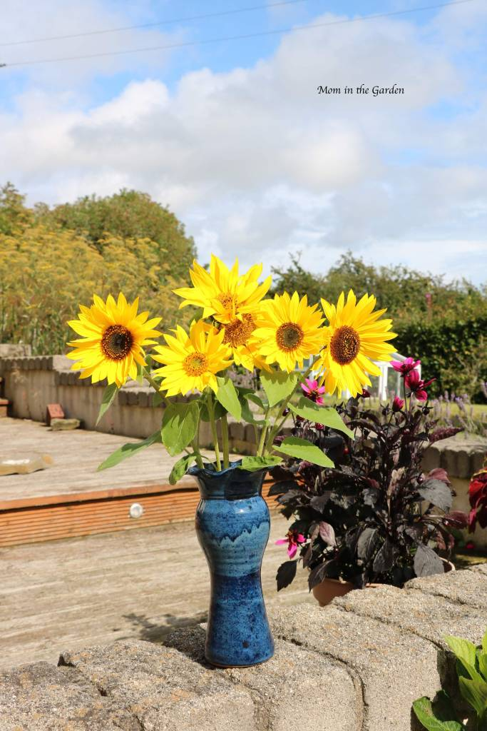 sunflowers in a vase Aug 19