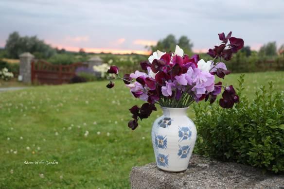 Sweet pea in a vase