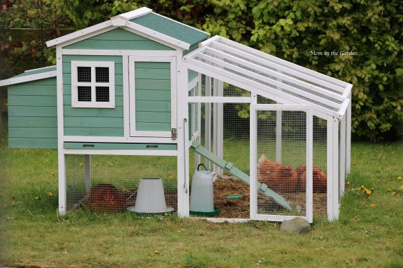 Chicken house with chickens April 29