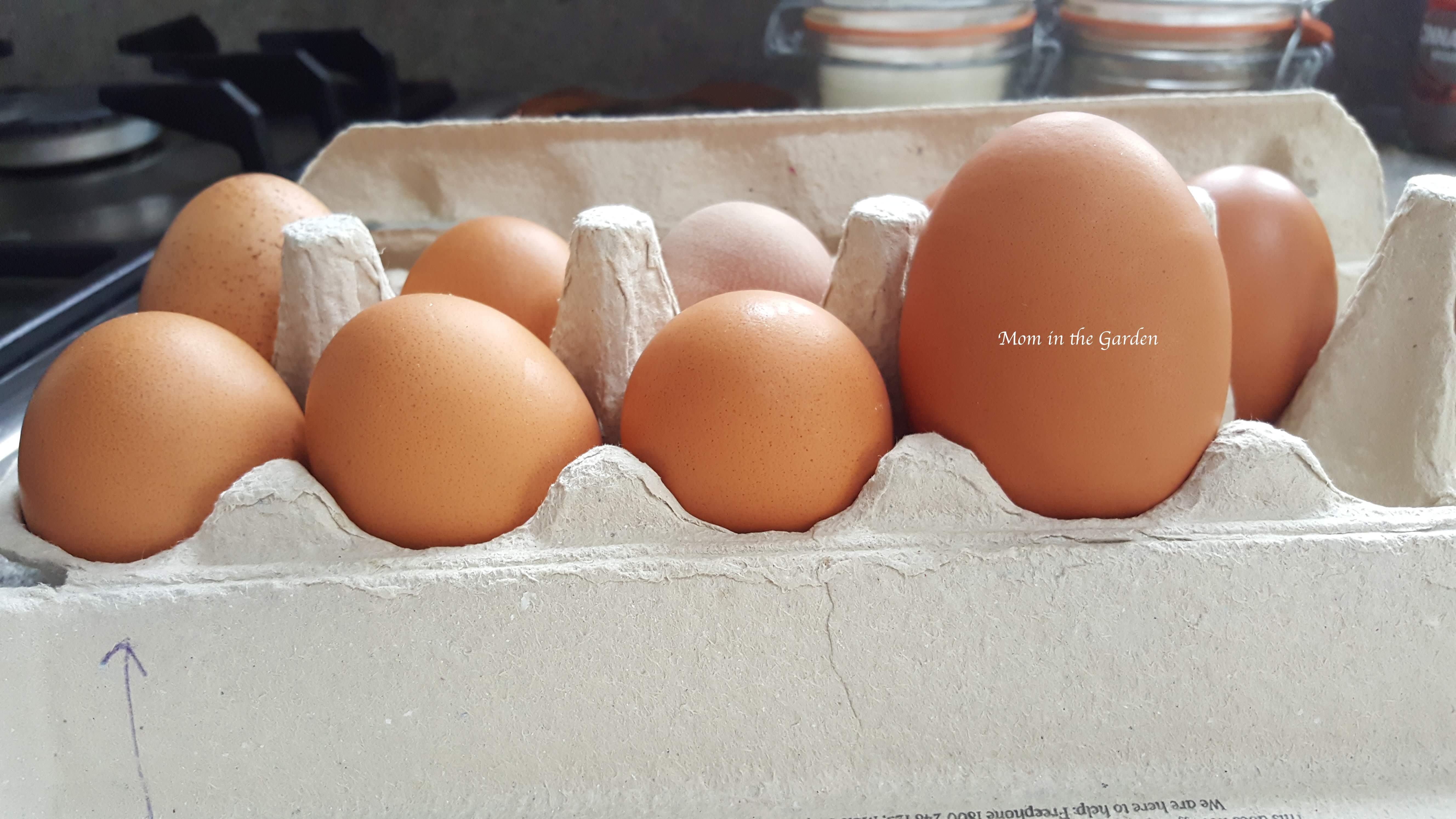 egg carton of fresh eggs