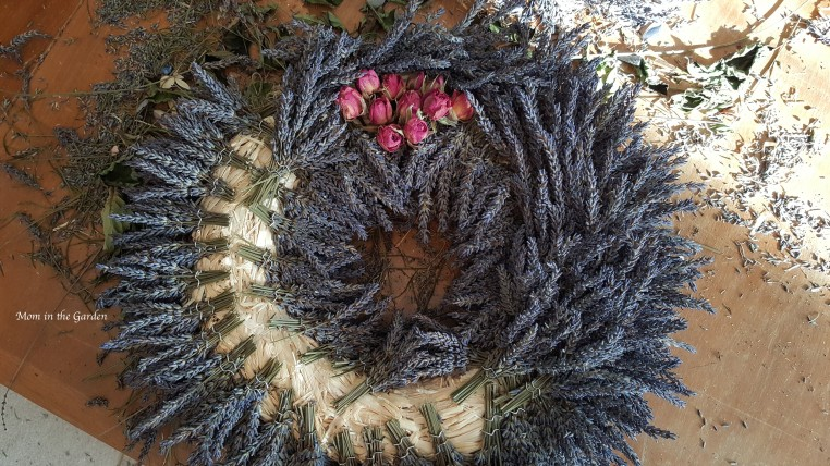 Lavender wreath in progress roses on top