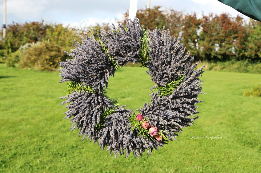Lavender wreath + Rosemary + roses outside