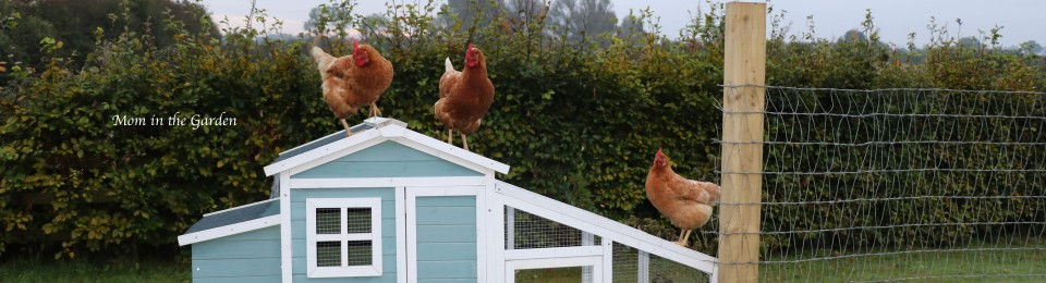 three Chickens on roof