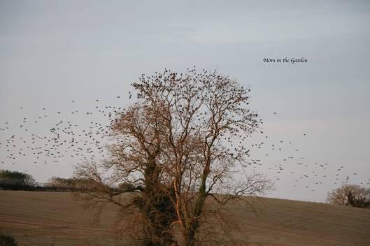 Tree full of birds Nov 16