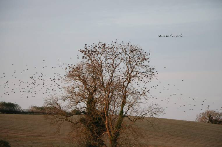 Tree full of birds Nov 16