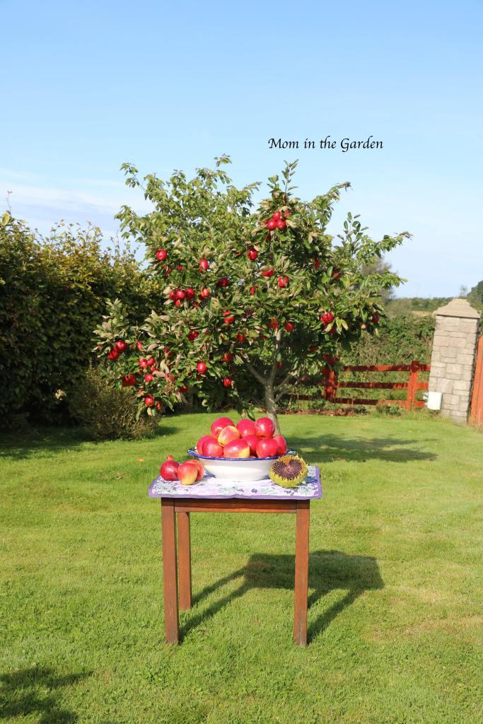 apples in bowl + tree