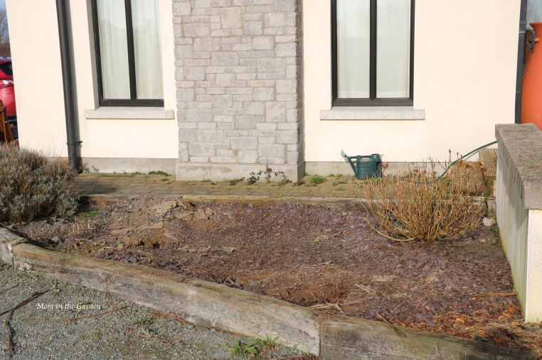 Cleared out lavender + hydrangea bed March 1