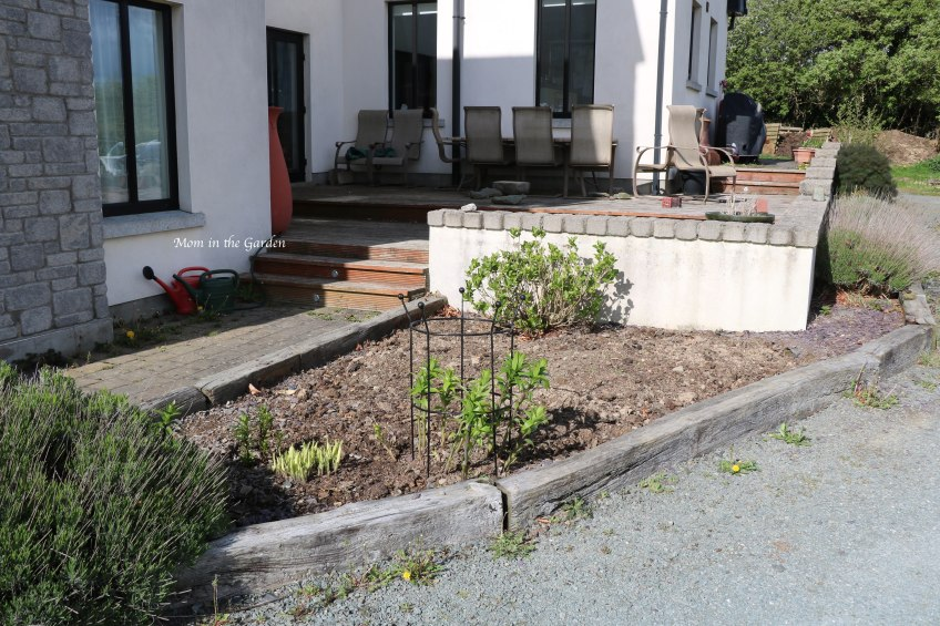 Dug-up bed mature Lavender + hydrangea + hosta + lilies