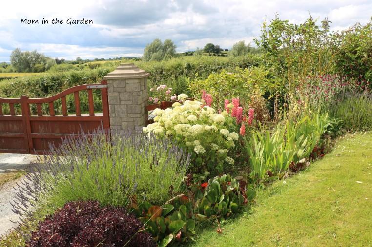 July front garden