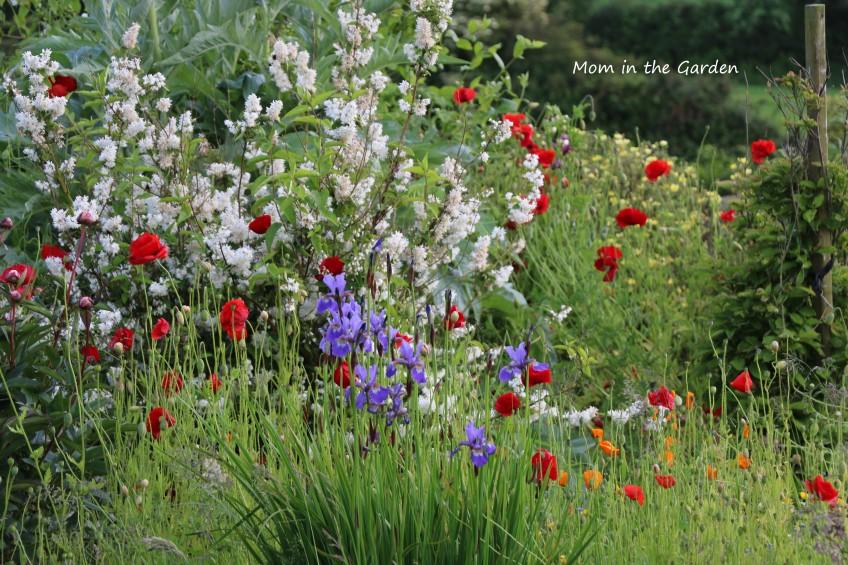 June Rainbow garden