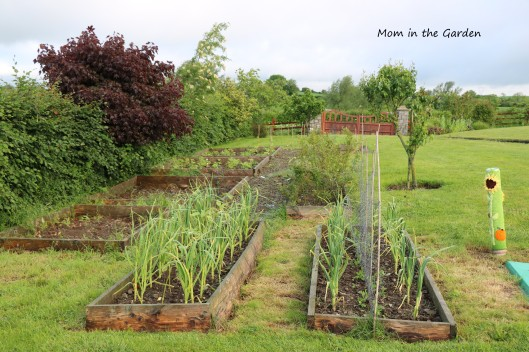 June view of the veggie garden