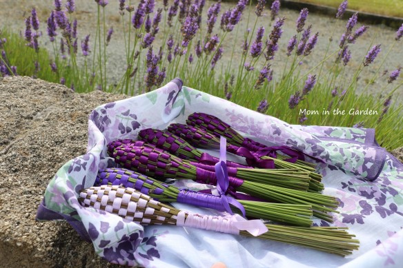 Lavender wands in July