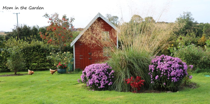 October Playhouse garden with chickens