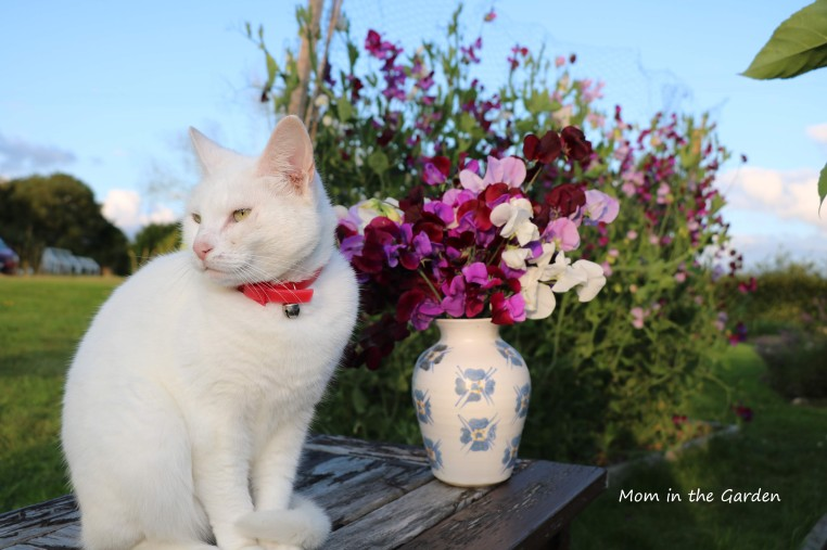 Sweet pea + Kitty
