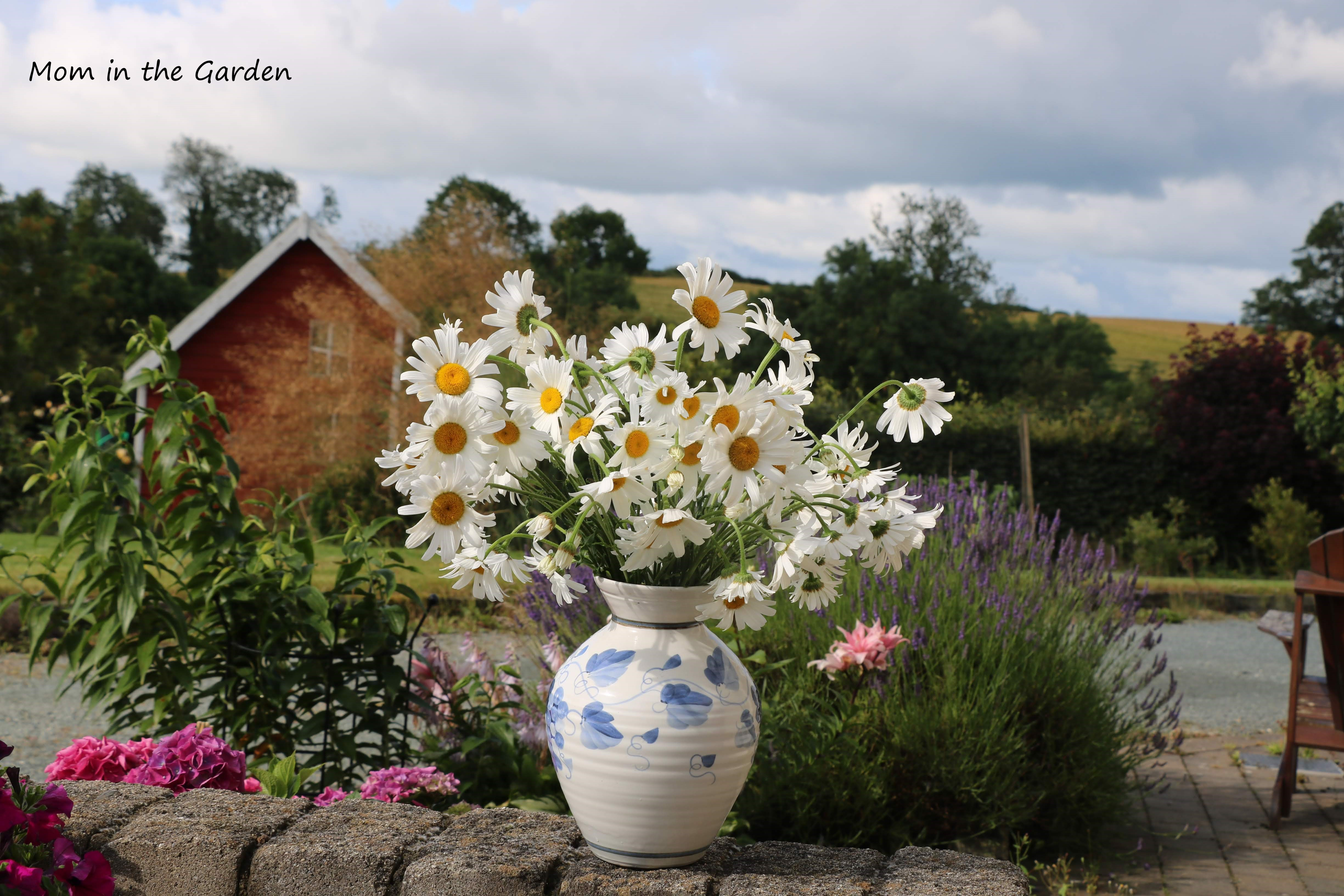 Vase of Daisies in July