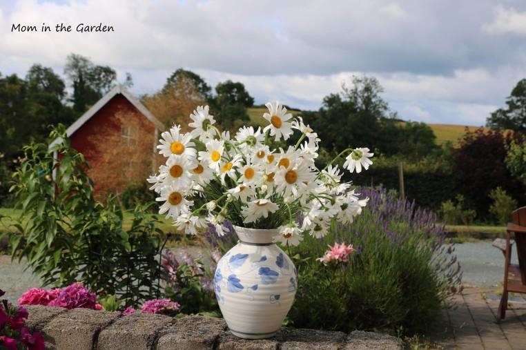 Vase of Daisies in July