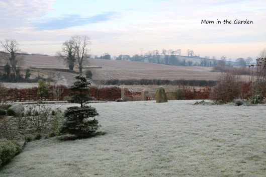 Frosty view of front garden