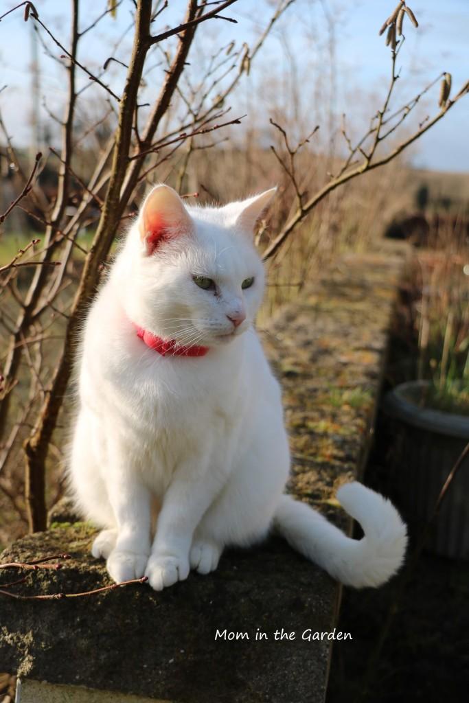 Cat on wall in sun