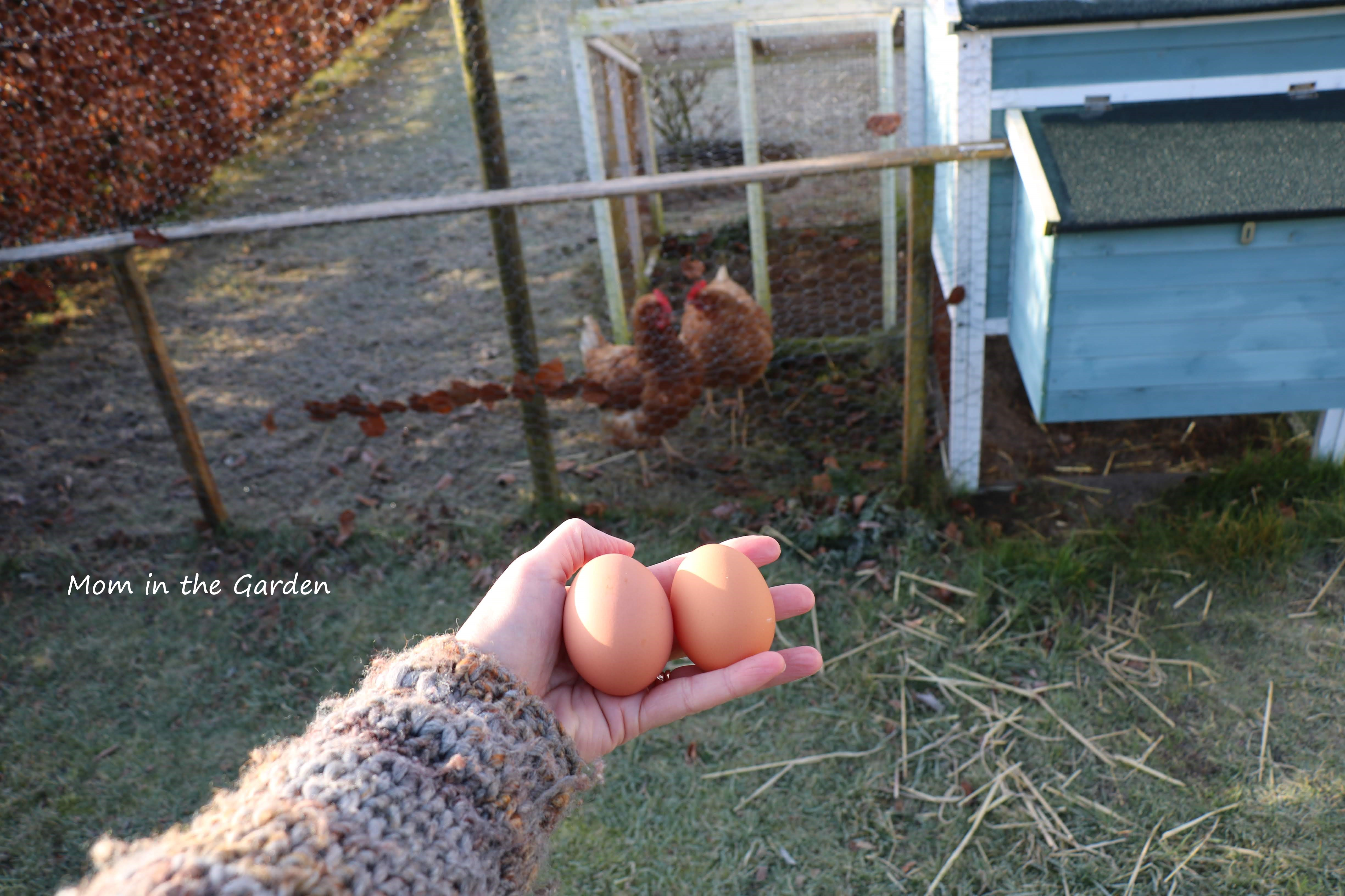 two eggs and two chickens