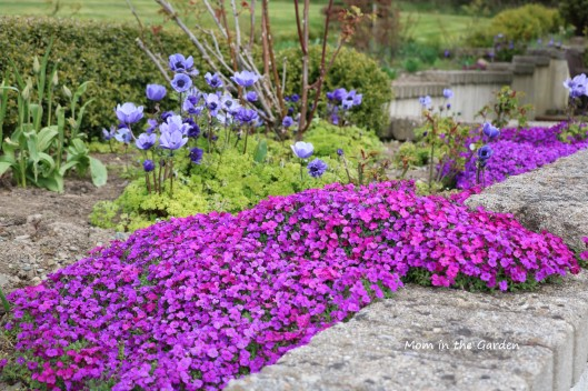 aubrieta April full bed