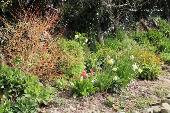 early spring ditch wall garden