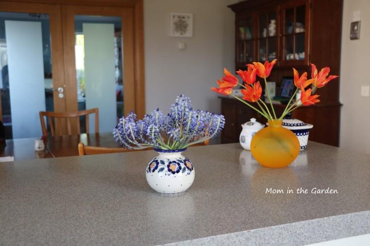Grape hyacinth in a vase inside
