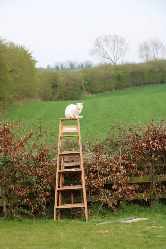 Kitty on top of ladder