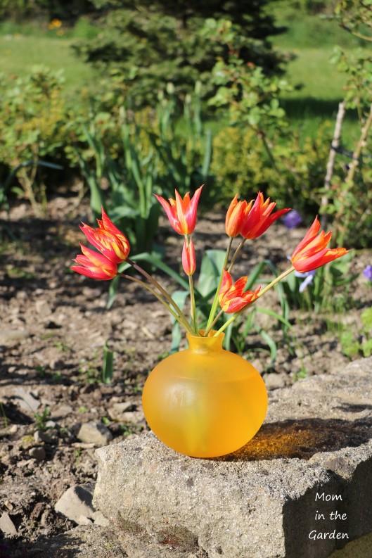 Tulip Ballerina in vase