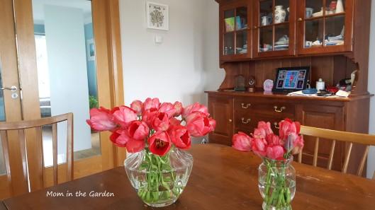 Tulip fire cut tulips
