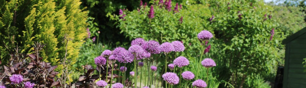 Allium + Lilacs